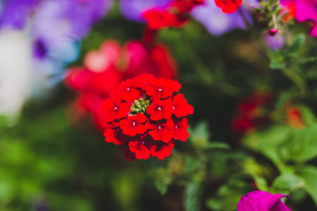 colorful mixed flowers shot at shallow depth of field Stock Photo - 104383410