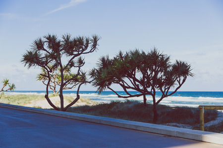 GOLD COAST, AUSTRALIA - January 6th, 2015: beach and greenery view from Surfers Paradise main seaside walk