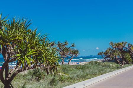GOLD COAST, AUSTRALIA - January 16th, 2015: tropical trees and plant along Surfers Paradise beach in Queensland