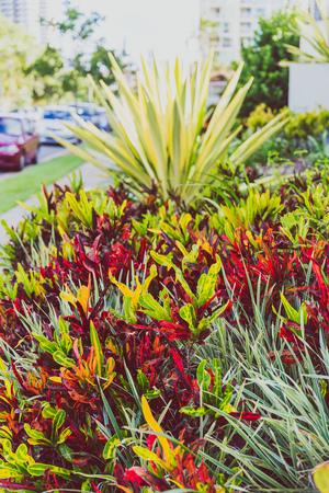 close-up of beautiful subtropical succulent plant shot in Queensland, Australia in summer