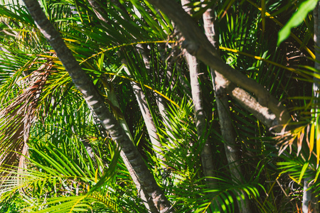 close-up of beautiful subtropical palm trees shot in Queensland, Australia in summer Stock Photo