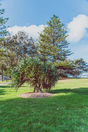 group of beautiful subtropical trees shot in Queensland, Australia in summer