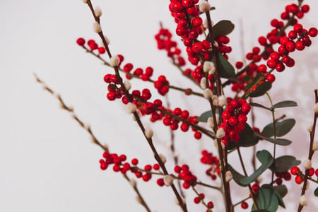 decorative Christmas themed bunch of eucalyptus red holly berries and cottonon white background Stock Photo