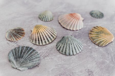 group of colorful seashells on gray background, collection of shells from the beach Stok Fotoğraf