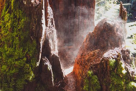 tree trunk in rainforest setting with moss steaming from the hot sunshine, shot in Australia Stock Photo