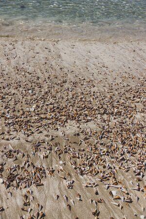 multitude of spiral cone shells along the beach in Marion Bay in Tasmania Australia Banco de Imagens