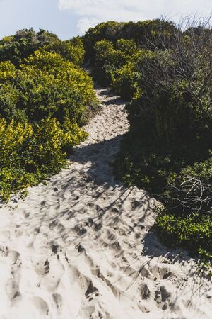 wattle and native Australian plants growing in the sand along the beach in Marion Bay on the East Coast of Tasmania in Australia