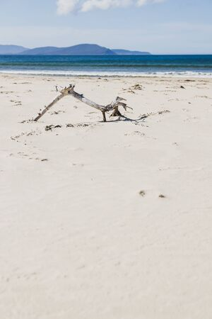 tree branch on the sand on sunny pristine and deserted beach overlooking the South Pacific Ocean in Marion Bay along the East Coast of Tasmania Australia