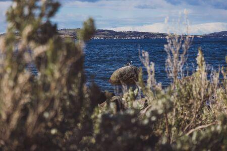 rugged and beautiful little beach in Tasmania Australia in the area of Taroona near Hobart