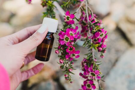 natural beauty and wellness concept, woman holding essential oil bottle in her hand next to tea tree plant with pink flowers in the background shot at shallow depth of field Banco de Imagens - 133303842