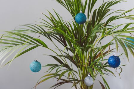 alternative Christmas tree conceptual still-life, palm tree with Christmas baubles as decoration for the festive season happening in summer for the Southern Hemisphere