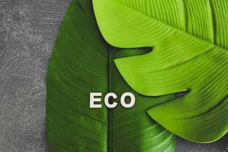 ecology and respect for the environemnt conceptual still-life, Eco-friendly text on top of  tropical banana and monstera leaves
