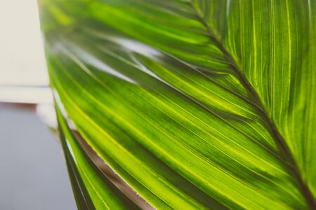 close-up of palm tree plant indoor with window light shining through shot at shallow depth of field Stock Photo - 140077868