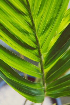 close-up of palm tree plant indoor with window light shining through shot at shallow depth of field Stock Photo - 140077951