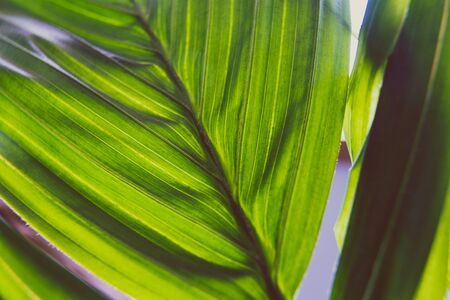 close-up of palm tree plant indoor with window light shining through shot at shallow depth of field Stock Photo - 140077978