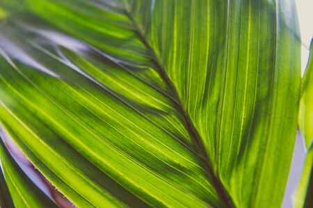 close-up of palm tree plant indoor with window light shining through shot at shallow depth of field