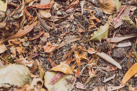 dead leaves fallen from trees with brown colors piling up on the ground