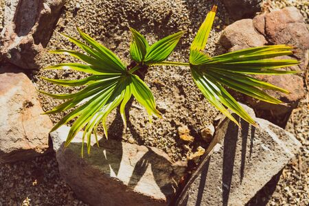 tiny palm tree with small leaves shining under direct sunshine in sunny backyard