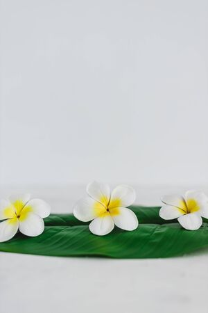 natural beauty and spa concept, monoi flowers on tropical green leaf on calming white background Stock Photo - 142539818