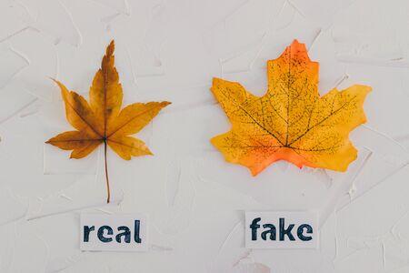 real vs fake conceptual still-life series, real autumn maple leaf vs plastic replica