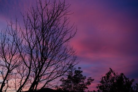 sunset sky with beautiful clouds over branches from autumn trees shot in Australia