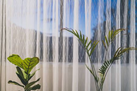 palm tree and fiddle leaf fig indoor next to a big window with sunset outside shot at shallow depth of field Stock Photo - 148962289