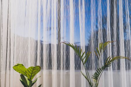 palm tree and fiddle leaf fig indoor next to a big window with sunset outside shot at shallow depth of field Stock Photo - 148962245