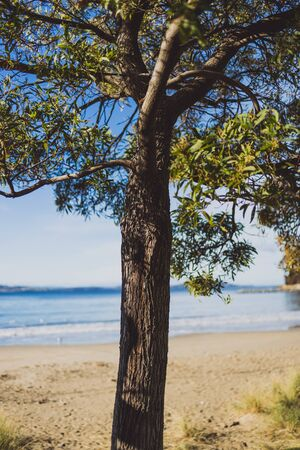 beautiful pristine Tasmanina beach with serene sky on a winter morning with tree in the center of the frame Stock Photo - 148961820