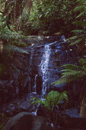 wild bush landscape with waterfall and thick vegetation in Myrtle Falls in Tasmania, Australia