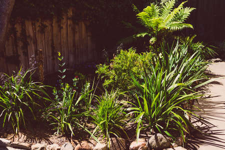 native Australian plants outdoor in sunny backyard shot at shallow depth of field Stock Photo