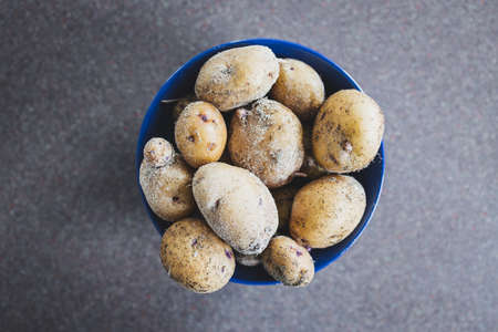 simple food ingredients concept, bowl with fresh potatoes straight out of hte ground with dirt on them Stock Photo