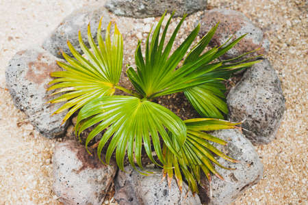 close-up of tiny palm plant outdoor in sunny backyard shot at shallow depth of field Stock Photo