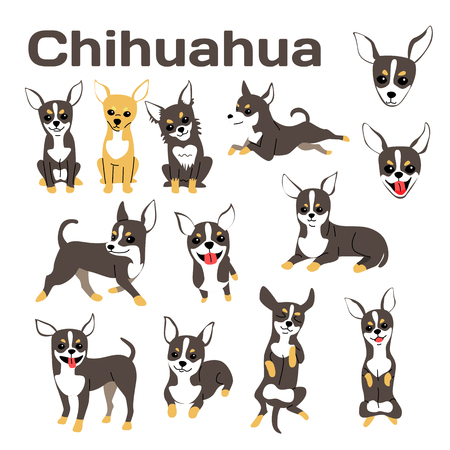 chihuahua illustration,dog poses,dog breed