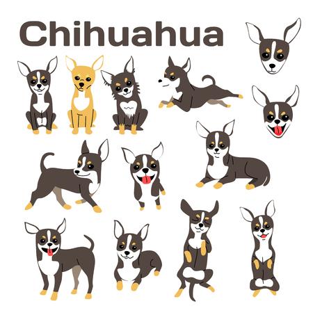 chihuahua illustration,dog poses,dog breed