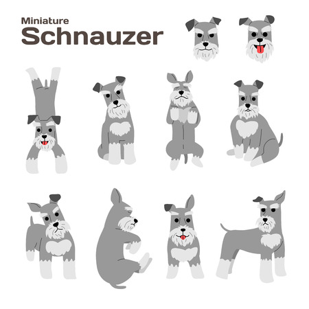 miniature schnauzer illustration,dog poses,dog breed