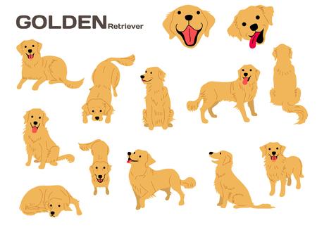 Ilustración de golden retriever, poses de perro, raza de perro