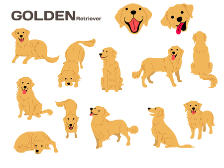 golden retriever illustration,dog poses,dog breed Illustration