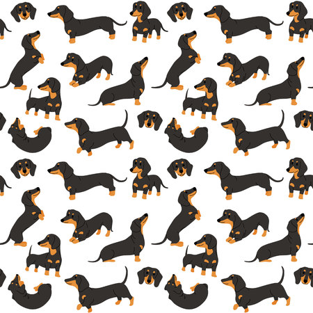 dachshund pattern,dog poses,dog breed,seamless pattern background Archivio Fotografico - 122533427