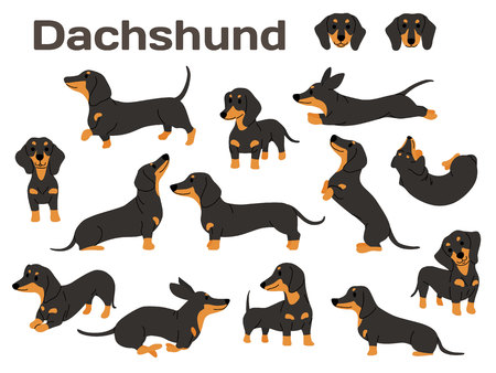 illustration de teckel, poses de chien, race de chien Vecteurs