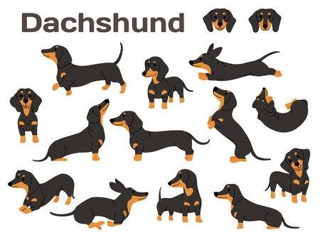 Ilustración de perro salchicha, poses de perro, raza de perro Ilustración de vector