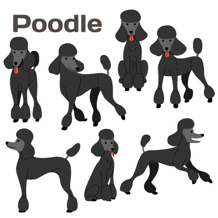poodle illustration,dog poses,dog breed