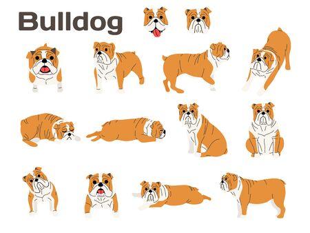 bulldog illustration, dog poses Ilustração