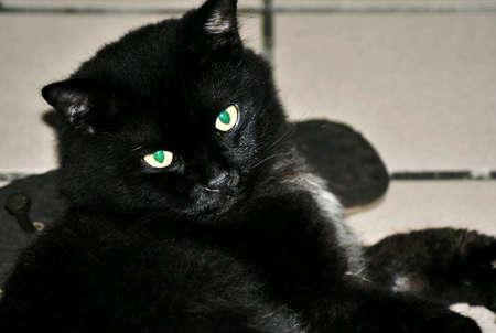 greeneyes: Black cat resting