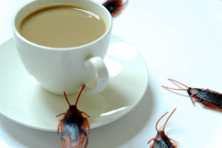 Hygiene,healthcare and medical concept.Cockroach eating coffee.Cockroaches are carriers of the disease.