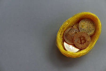 Replica of golden bitcoin in a bird nest. Grey background. Copy space for text or logo.