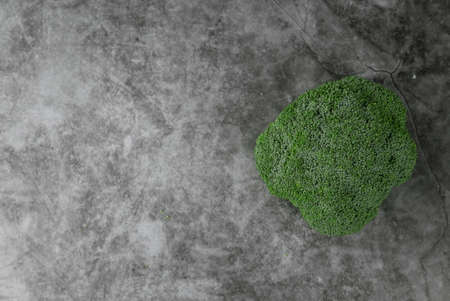 Top view of broccoli on grey,black and white floor. Copy space for text or logo.