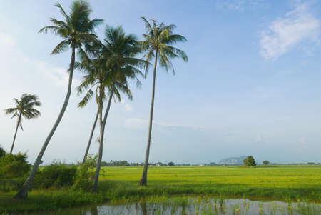 Landscape view of village with coconut tree,paddy tree,mountain tree and blue cloudy sky. 免版税图像