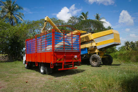 A farmer feeding rice grain from a paddy machine to truck.
