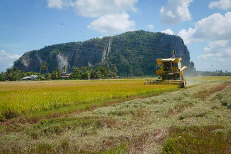ALOR SETAR,MALAYSIA - CIRCA FEBRUARY,2020 : Harvester tractor working at paddy field.
