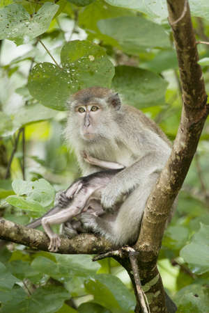 Female Monkey with her baby